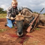 Wildebeest shot
